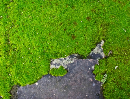 An image of a moss growing on a concrete wall. photo