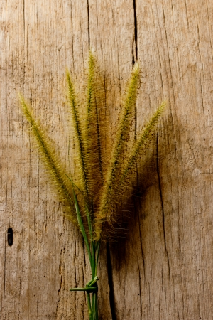 grass on wooden background photo