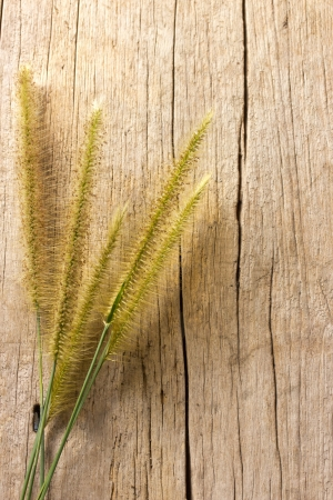 grass on wooden background Stock Photo - 24209128