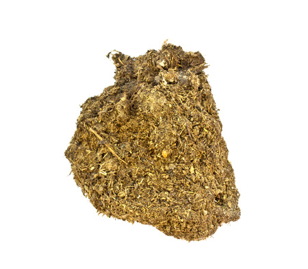 dry cow: dry cow dung on White background