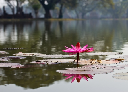 beautiful blossom lotus flower in Thailand pond reflect on water Stock Photo - 25410940