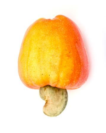흰색 배경에 열 대 캐슈 과일