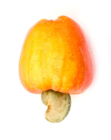 Tropical Cashew fruits on a white background