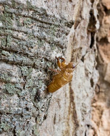 A cicada slough photo