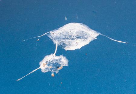 droppings: Bird droppings on my ocean blue car! Stock Photo