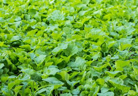 plots: Organic vegetable plots. Stock Photo