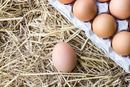 straws: Chicken eggs on straws Stock Photo