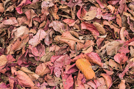 red fallen leaves laying on the ground. photo