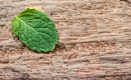 pepper mint: Pepper mint leaves on old wood background