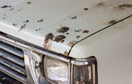 droppings: Bird droppings on my white old car!