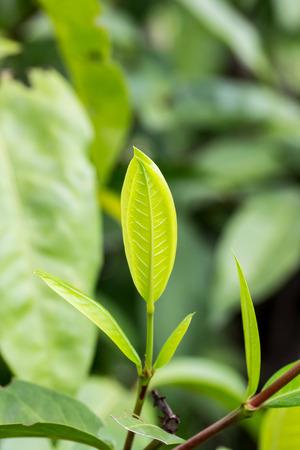 nature green: �rboles forestales de hoja. fondos de la naturaleza de madera verdes. Foto de archivo