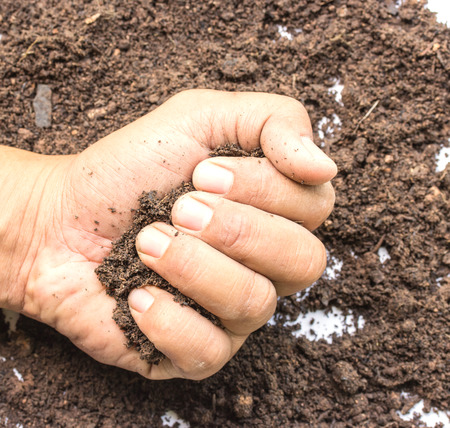 wizened: Close up image of hand full of soil against white background Stock Photo