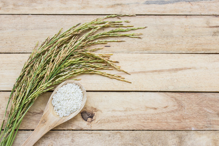 paddy: Wooden spoon with rice and paddy pile on wood floor Stock Photo