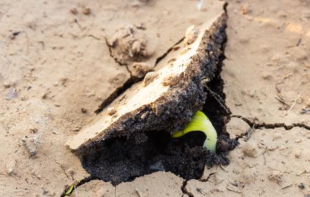 土壌中で発芽して幼苗種子