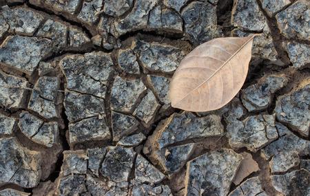 dry leaf: dry leaf on dry ground