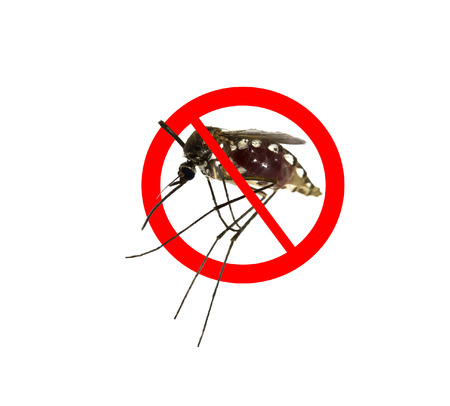 culicidae: Stop Prohibit sign on mosquito: Tropical animal, danger bacteria carrier cause dangerous illness disease- zika virus, malaria, flavivirus, dengue, gnat Stock Photo