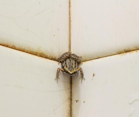 coldblooded: close up bullfrog in bathroom