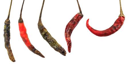 putrid: Rotten chili isolated on white background Stock Photo