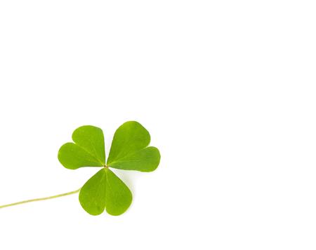 Green four-leaf clover leaf on white background.