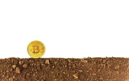 Gold coins or bitcoin on the soil Virtual money on a brown background Future investment concept Фото со стока