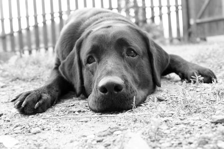 Cute sad dog in B&W (e.g. can be used for 'Missing You' or 'Please, Forgive Me' postcards) Stock Photo