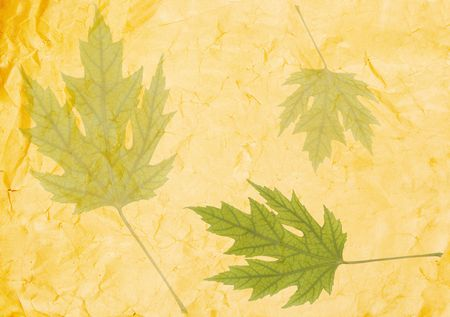Transparent green leaves on old crumpled paper (as an abstract background) Stock Photo - 3800078