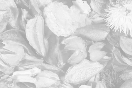 bw: Dried flowers and leaves (as a transparent black-and-white autumn background) Stock Photo