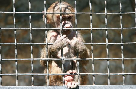 Sad little monkey in a cage photo