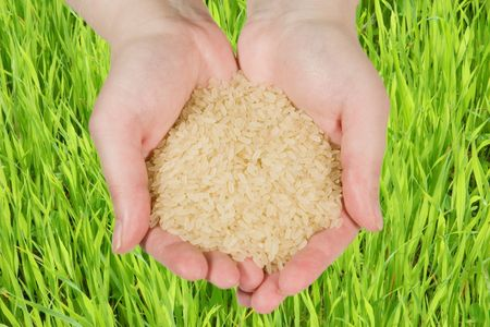 Rice in woman's hands against a green background photo