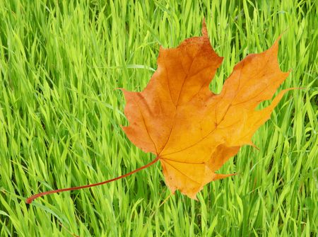 Autumn maple leaf flying against the background of green grass (Last Days of Summer concept) Stock Photo - 5645204