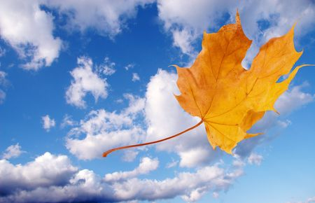Autumn maple leaf flying away against the background of blue sky with clouds Stock Photo - 5645073