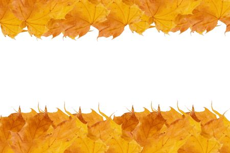 Rows of yellow autumn maple leaves (with empty space for your text) Stock Photo - 5731654