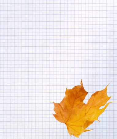 Yellow autumn maple leaf on a blank squared notebook sheet