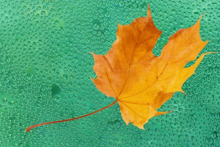 Autumn maple leaf on the green glass with raindrops Stock Photo - 5731651