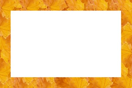 Rectangular frame made of rows of yellow autumn maple leaves (with empty space for your text or photo) Stock Photo - 5731649