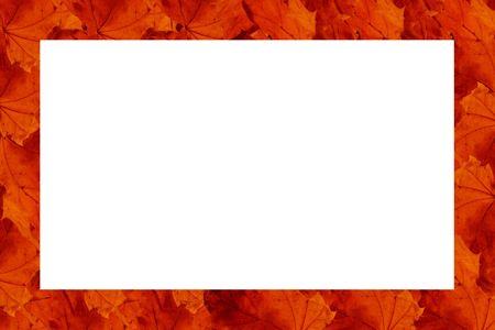 Rectangular frame made of rows of red autumn maple leaves (with empty space for your text or photo) Stock Photo - 6253281