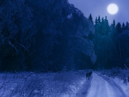 mystical forest: Winter night in the forest (with a lonely wolf on the road and moon in the sky) Stock Photo