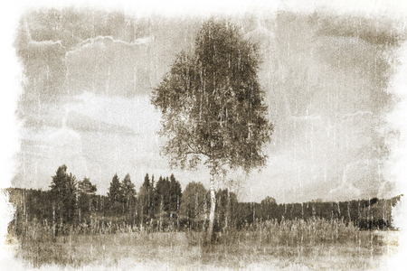 vintage landscape: Landscape with a birch-tree vintage style