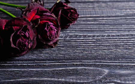 Three beautiful dry roses against an aged wooden background (retro toned, vintage style), with copy space for your text Stock Photo
