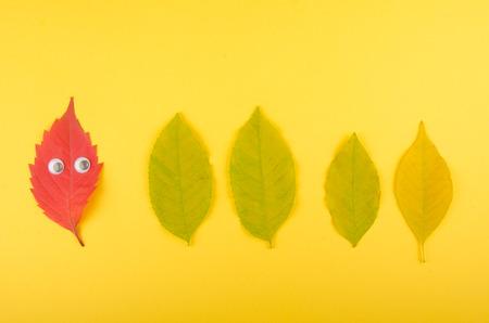 Helles rotes lustiges Herbstblatt mit den Augen, die eine Reihe der grünen Blätter (auf einem gelben Papierhintergrund), minimales Konzept, Draufsicht betrachten