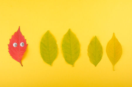 Bright red funny autumn leaf with eyes looking at a row of green leaves (on a yellow paper background), minimal concept, top view Stockfoto