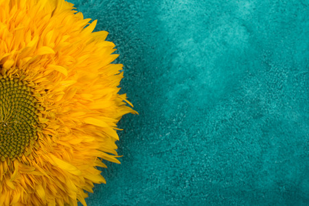 Bright yellow sunflower on a blue and green marble background