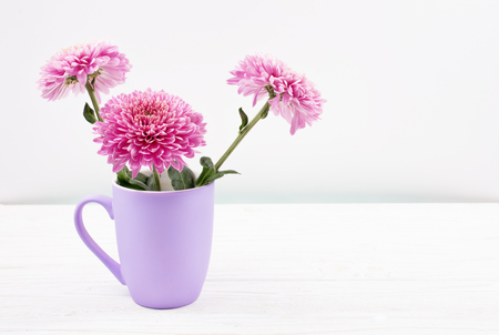 Beautiful pink chrysanthemum flowers in a purple cup on a white wooden table against a white background (copy space on the right for your text, minimal concept) Stock Photo