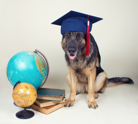 Cute German shepherd wearing a graduation cap and sitting next to two old globes and a pile of old books against a gray background, selective focus on the dog (retro style) Stock Photo