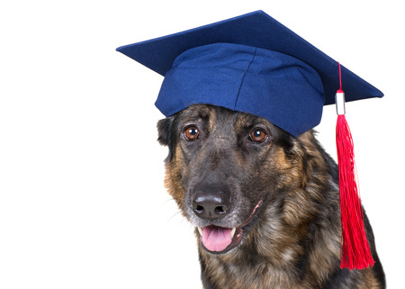 Portrait of a cute German shepherd wearing a graduation cap (isolated on white), copy space on the left for your text