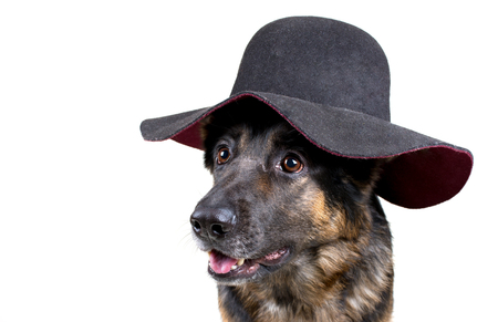 Portrait of a cute German shepherd wearing a hat and looking like a lady (isolated on white), copy space on the left for your text
