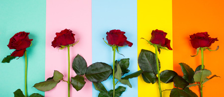 Row of bright red roses on a multicolored paper background of pastel and vibrant colors (top view, copy space for your text) Stockfoto - 112881237