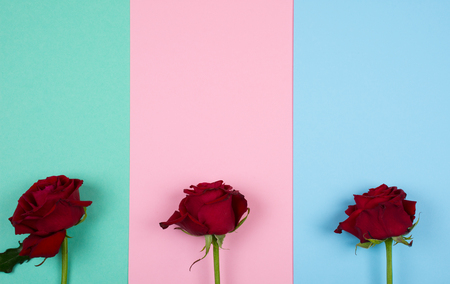Three bright red roses on a multicolored paper background of pastel colors (top view, copy space for your text) Stok Fotoğraf