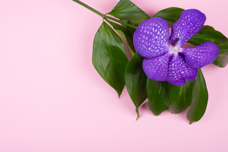 Beautiful purple orchid flower isolated on a pastel pink background (top view, copy space on the left for your text) Stockfoto - 112881240