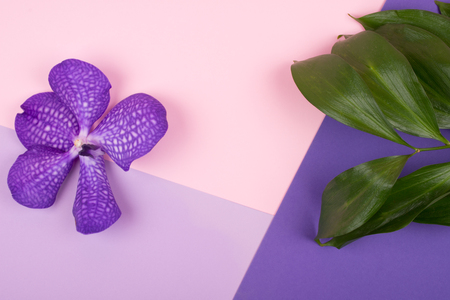 Beautiful purple orchid flower and green leaves on a multicolored background (top view, copy space for your text)